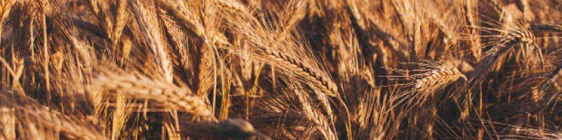 EBC-Bible Study book of Ruth